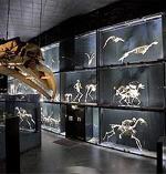 Museos de historia natural: de la curiosidad al conocimiento científico